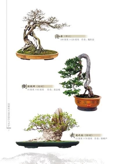侧重于介绍树木盆景制作工具与材料的准备,造型构思与制作技艺,主要