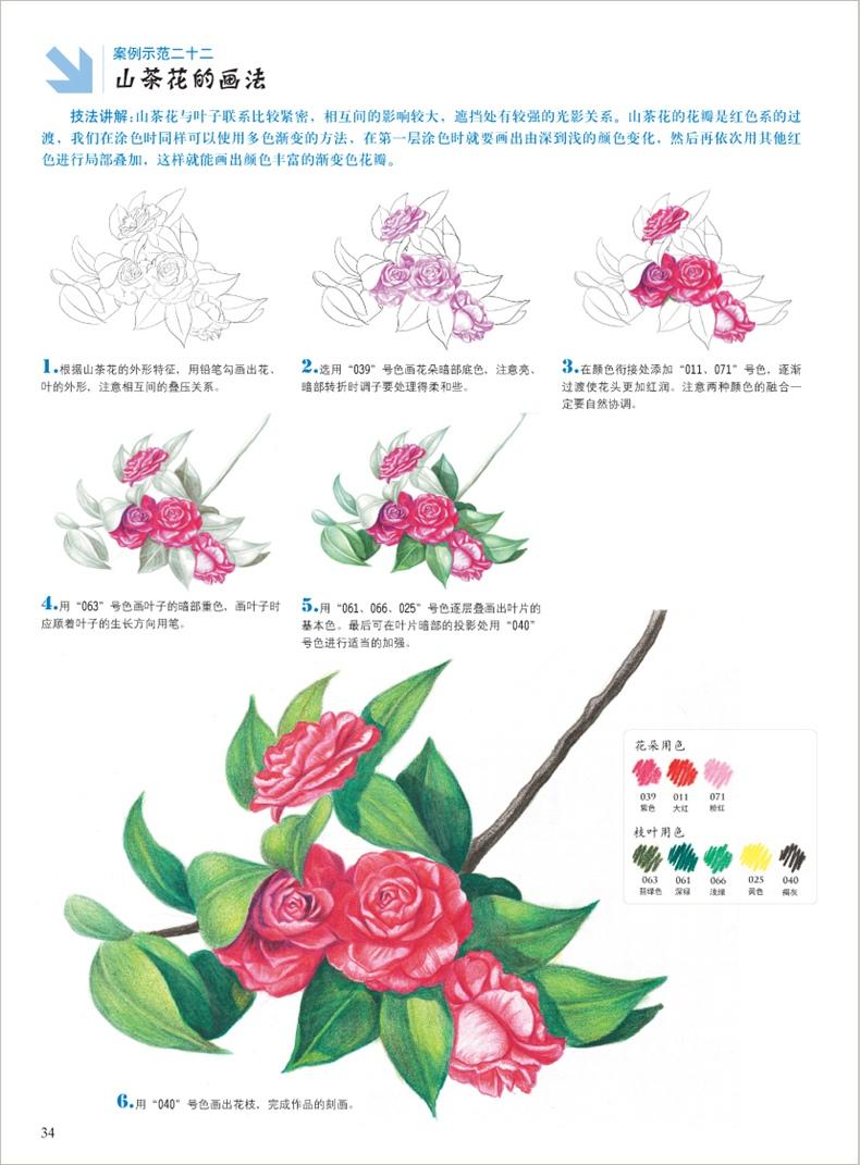 4冊 彩色鉛筆畫 花草水果美食動物手繪畫彩鉛畫入門教程書 素描繪畫