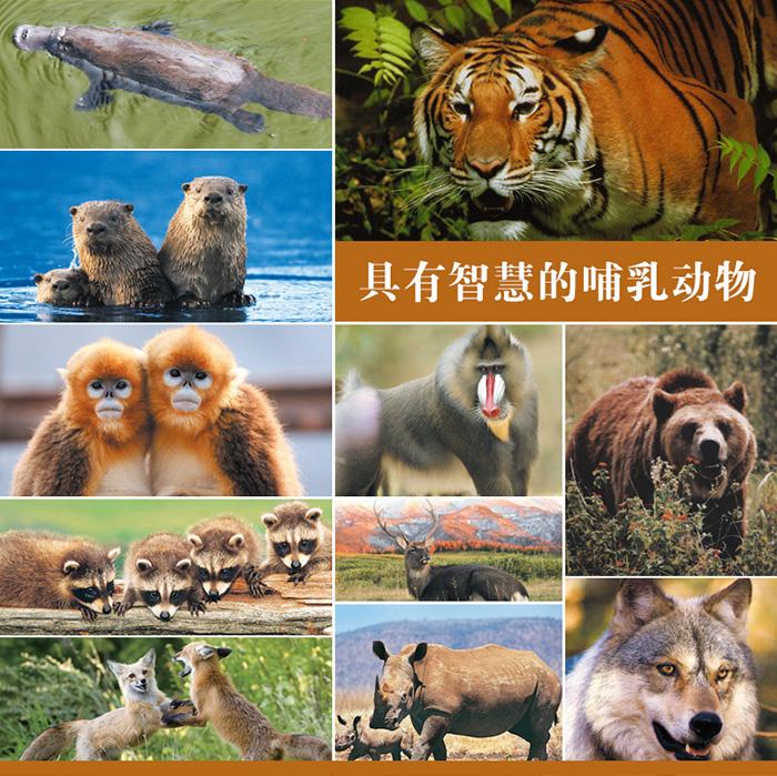 常见动物识别图鉴》自然图鉴编辑部