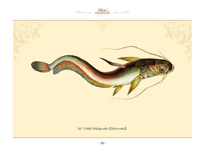 海洋博物馆手绘