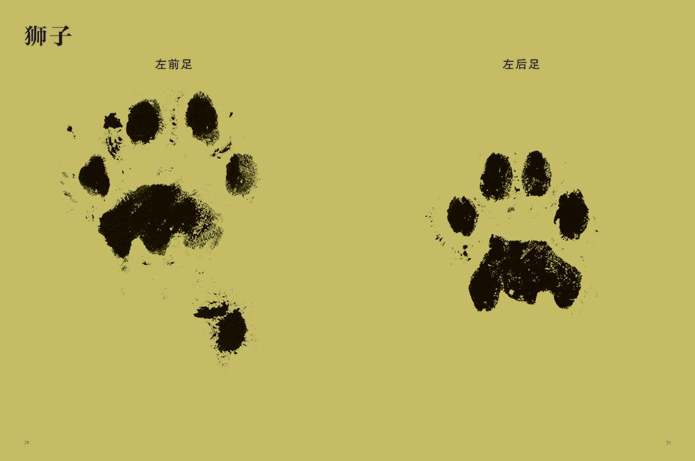 动物的脚印-百道网
