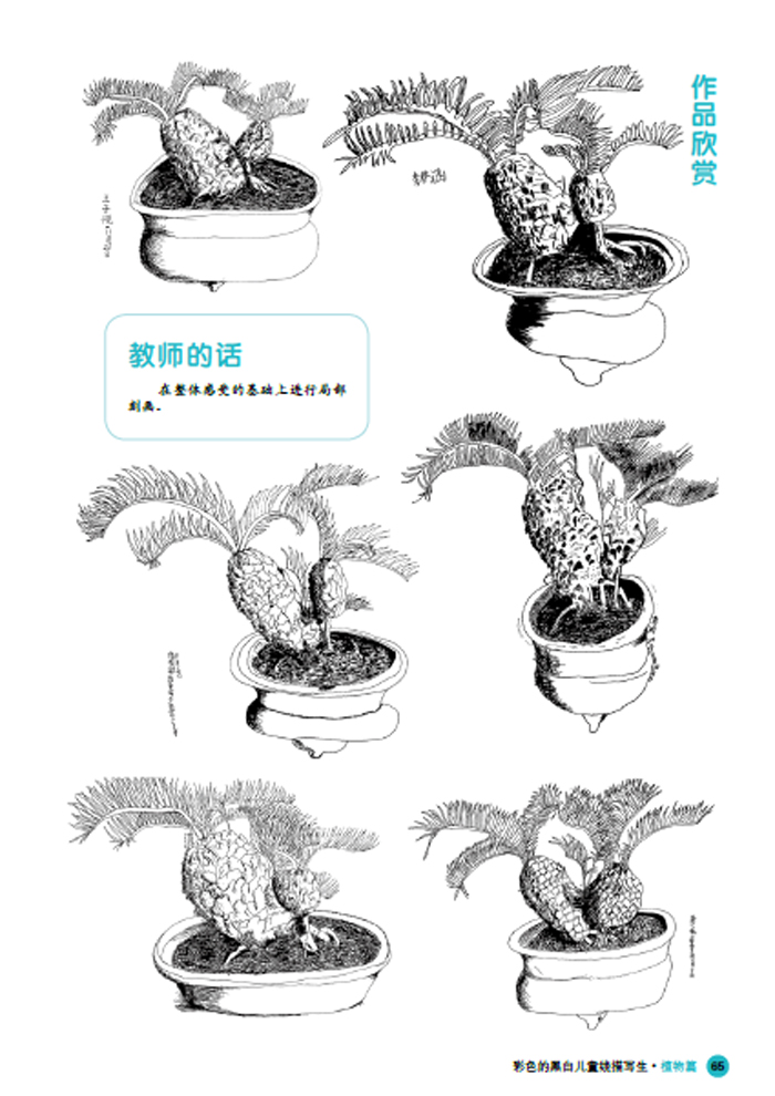 彩色的黑白-儿童线描画写生-植物篇