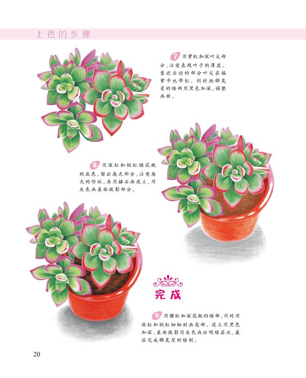浪漫彩铅系列 多肉植物/邱文昭